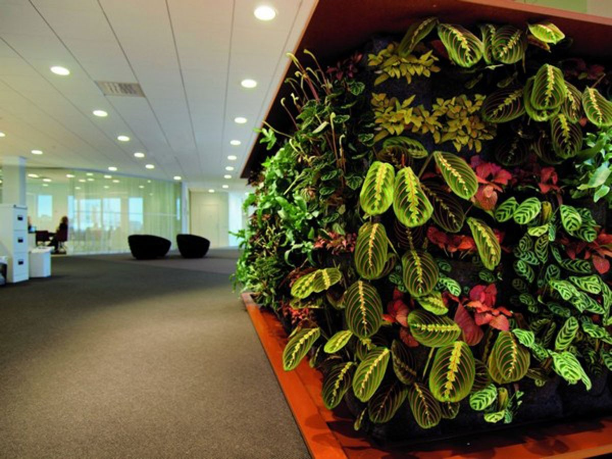 interior_plants_5