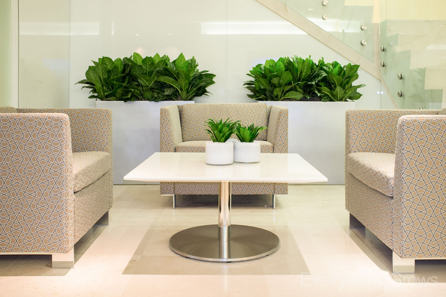 Indoor House Office Plants Near Miami Fl Plant Professionals