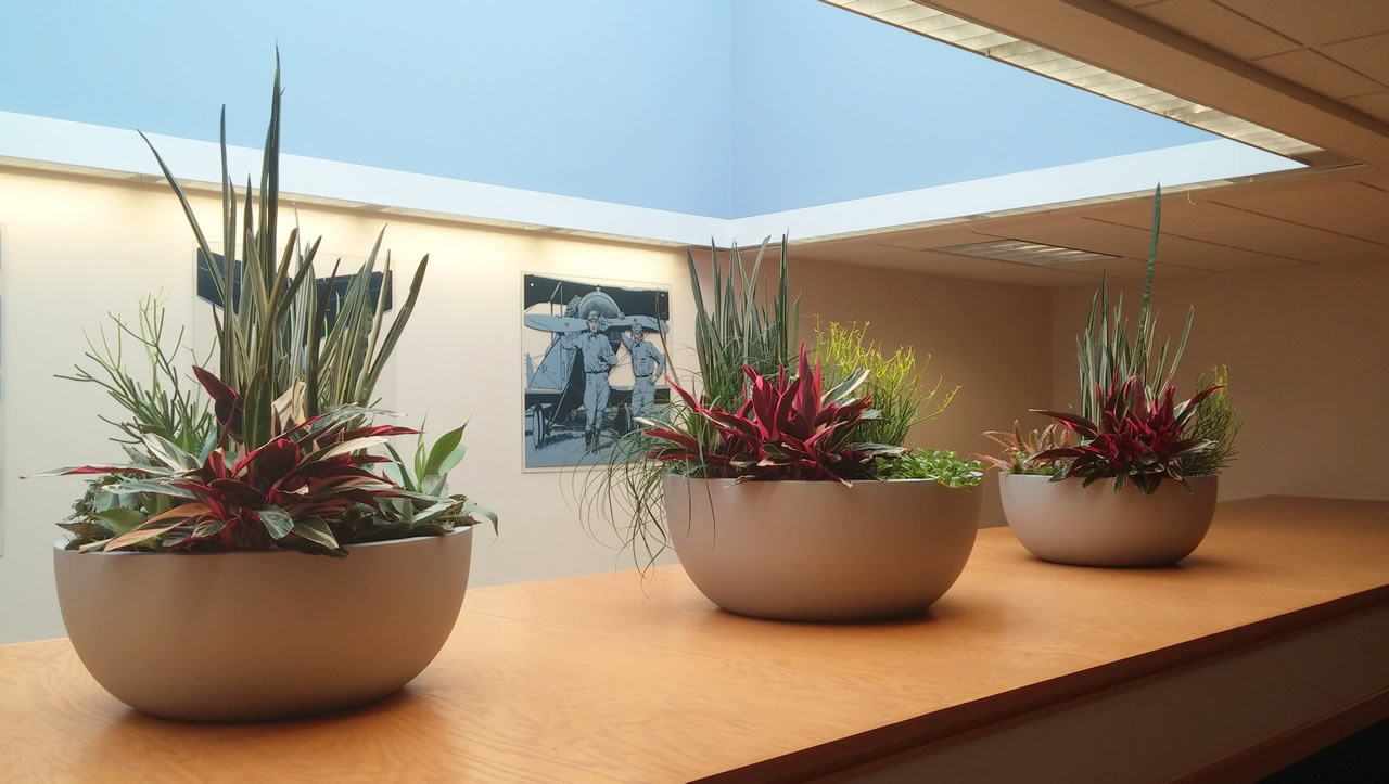 Indoor house office plants near miami fl plant - Interior design services near me ...