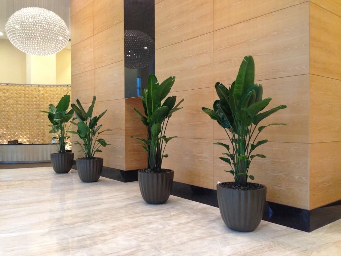 Interior Plants Amazing Pictures