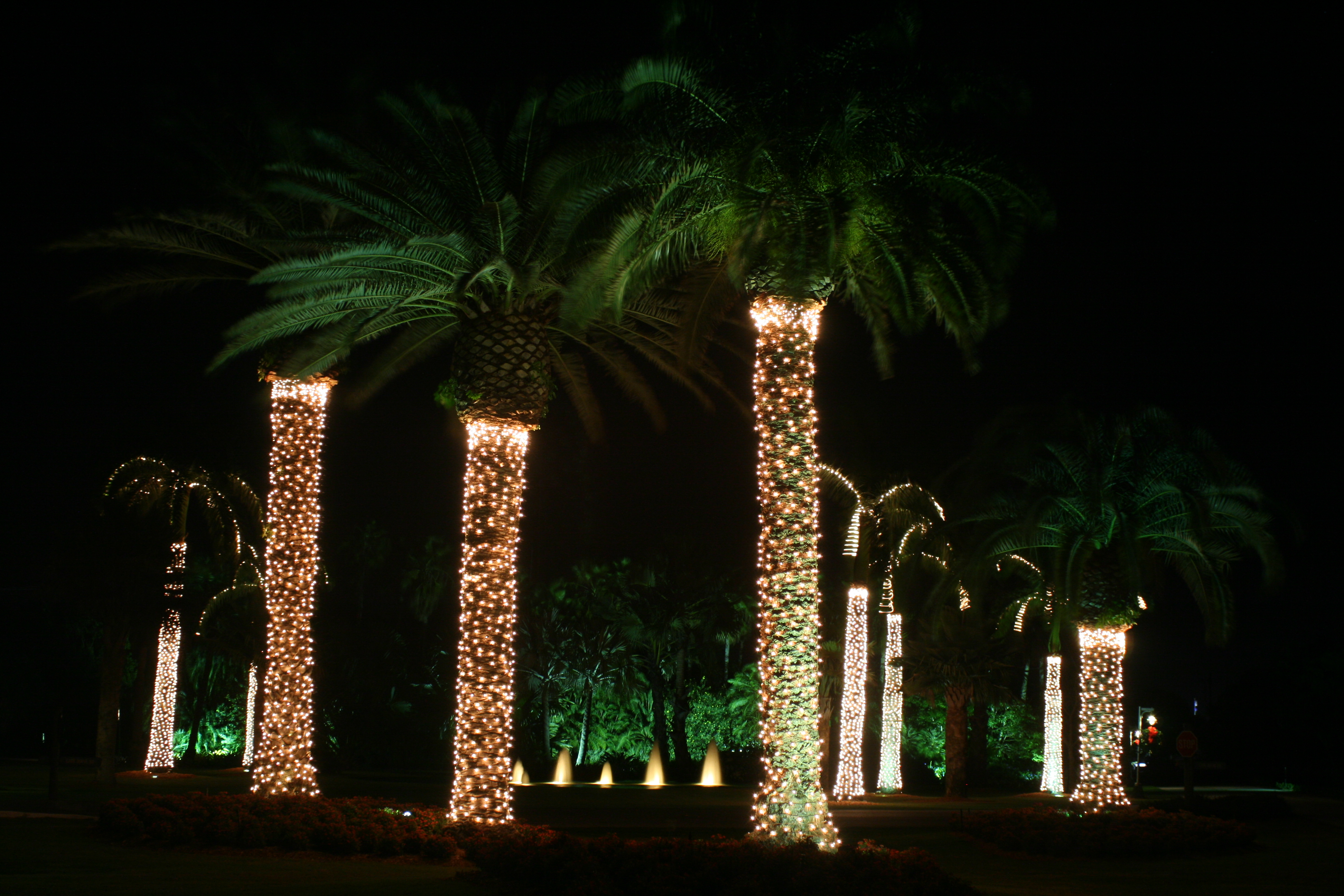 Holiday Lighting & Decorating Photos | Plant Professionals - Miami, FL