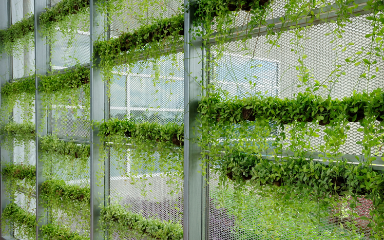 green wall in sustainable building