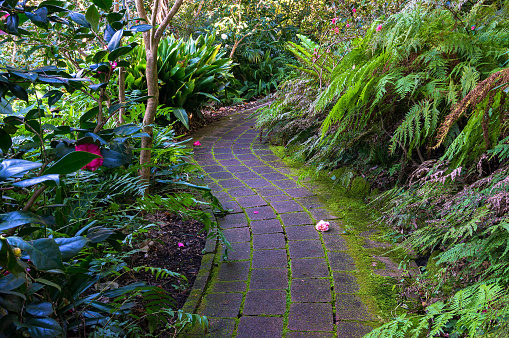 stone path in tropical garden