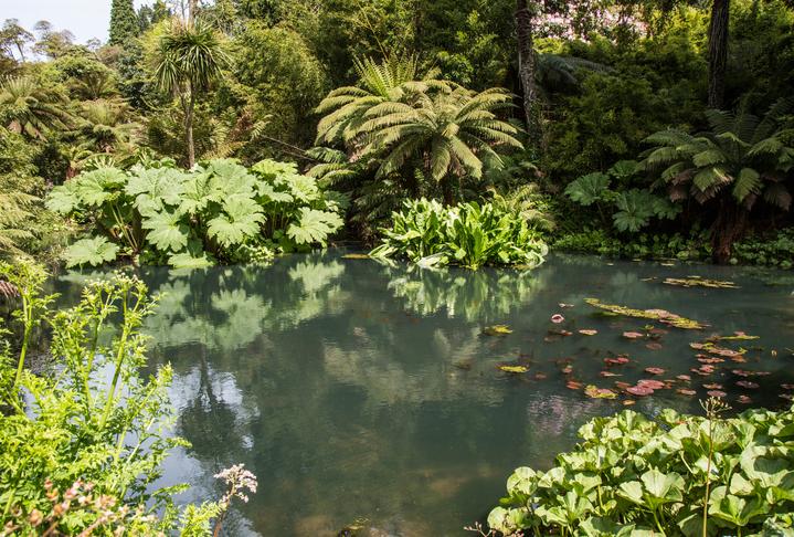 Tropical style garden pond