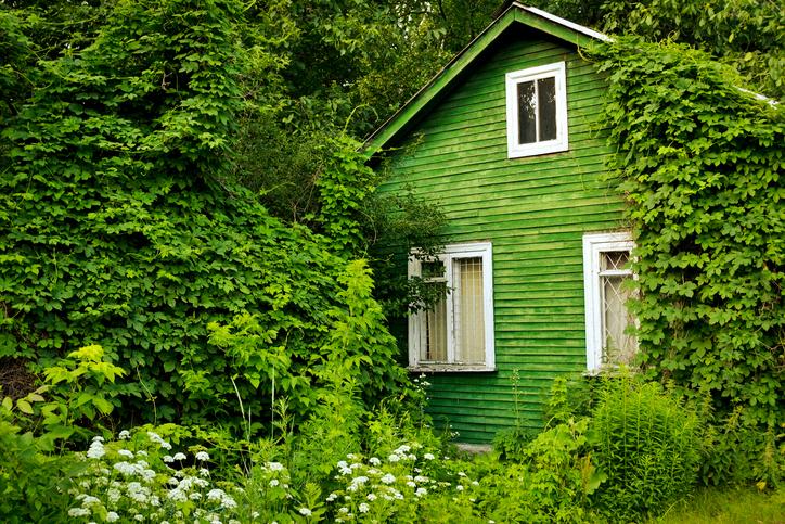 Plant Professionals Miami – Cottage Garden Landscape Design