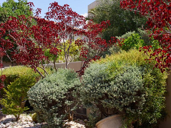Plant Professionals Miami – Mediterranean Landscape Design