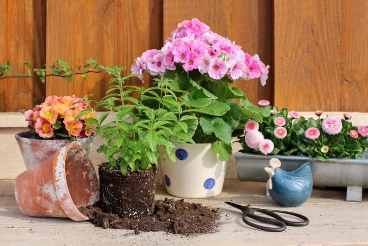 Successful Tips For Plant Upkeep - Repotting Plants