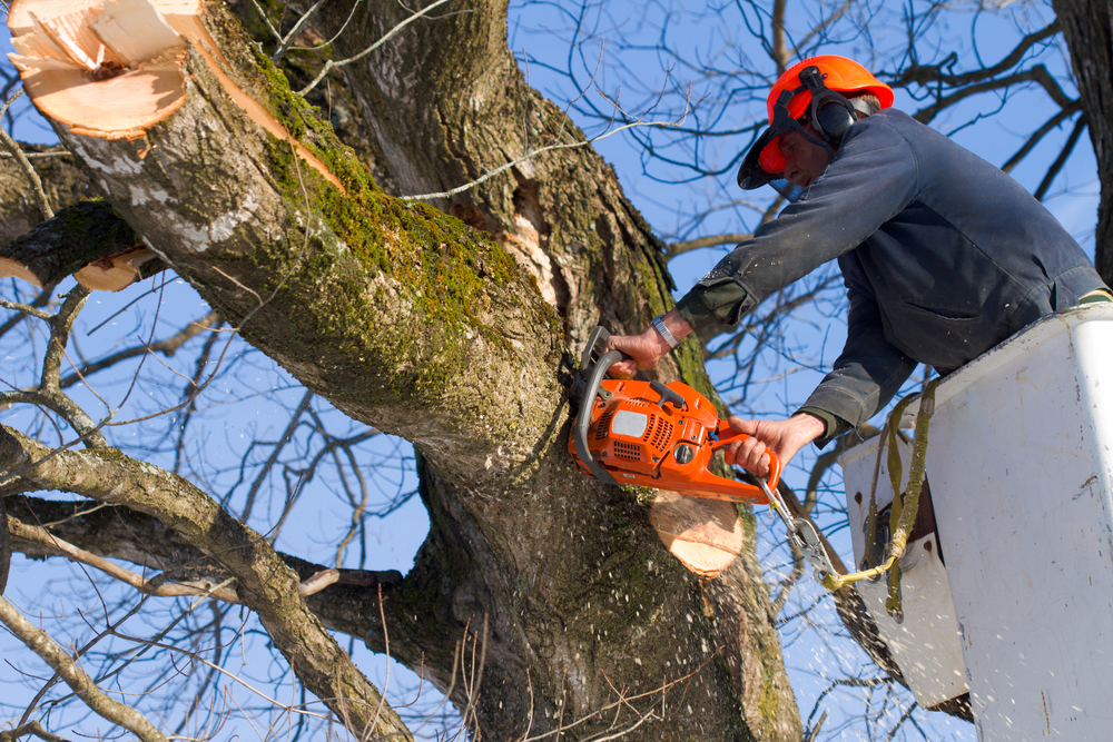 Tree Trimming and Pruning Services